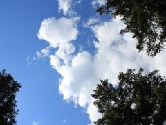 Мониторинг качества атмосферного воздуха